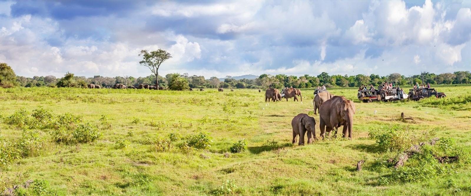 Travel Medicine for your safari.